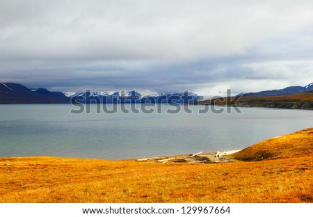 Barren autumn arctic landscape with bright yellow grass and distant blue mountain range covered with melting snow in Spitsbergen (Svalbard island), Norway, Greenland Sea, Atlantic ocean - stock photo