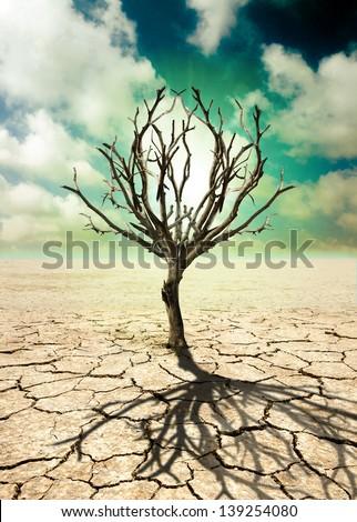 Barren tree on barren ground with summer clouds sky - stock photo