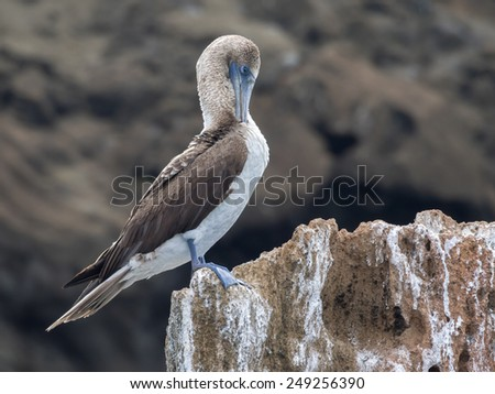 Bartolome Island - Galapagos National Park ecuador  South America - stock photo