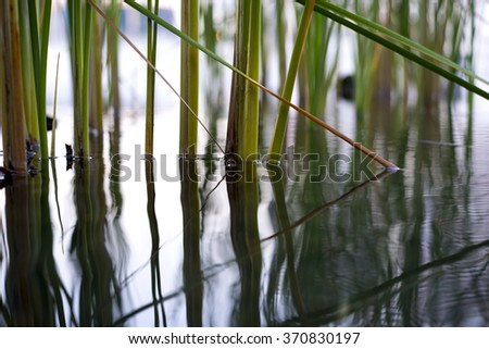 Base of sedge glow up from the water and reflection on the water.