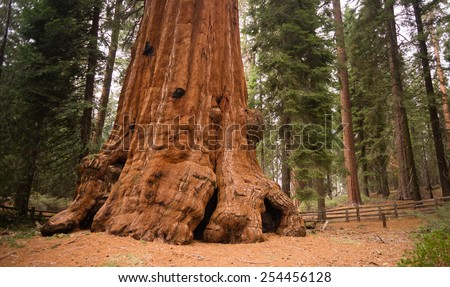Base Roots Giant Sequoia Tree Forest California - stock photo