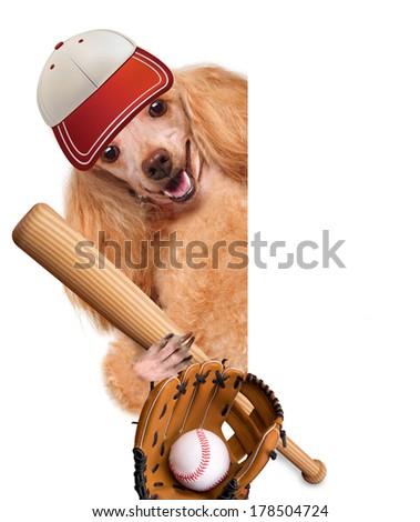 baseball dog with a baseball - stock photo