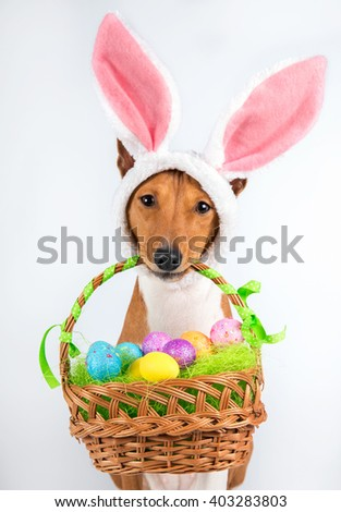 Basenji dog with bunny easter ears