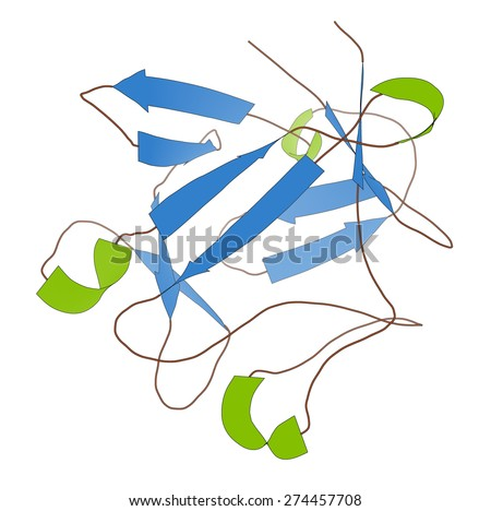 Basic fibroblast growth factor (bFGF) molecule. Plays role in wound healing, angiogenesis, etc. Cartoon model, secondary structure coloring: alpha-helices green, beta sheets blue. - stock photo