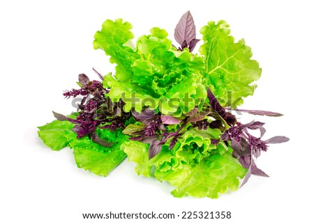 Basil and lettuce on white background. - stock photo