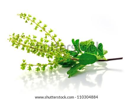 Basil  flower - stock photo