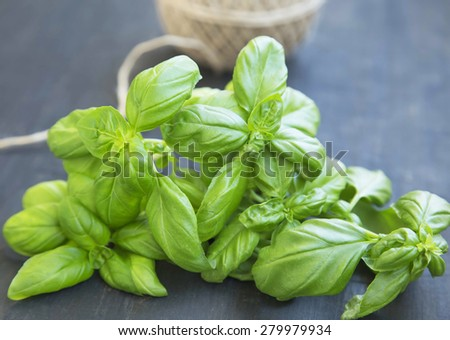 Basil Herb Fresh and Aromatic, Freshly Picked Raw Basil Bunch - stock photo