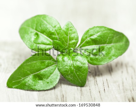 Basil herb leaves on a wooden food preparation board with space for text