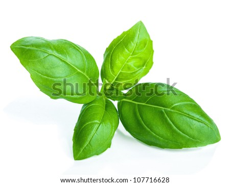 basil isolated - stock photo