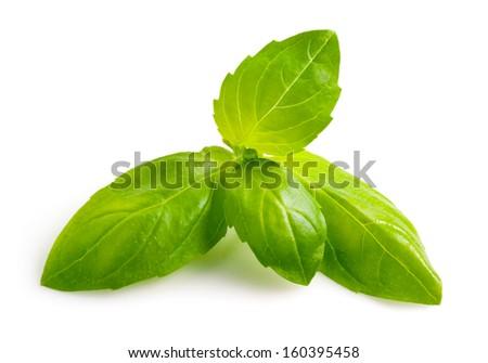 Basil leaf isolated - stock photo