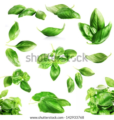Basil leaves close up on white - stock photo