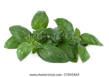 Basil leaves in front of white background