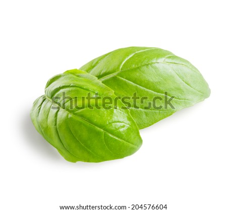 Basil leaves isolated on white - stock photo