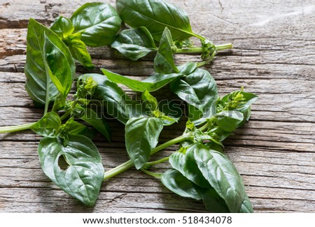 Basil leaves on a rustic background
