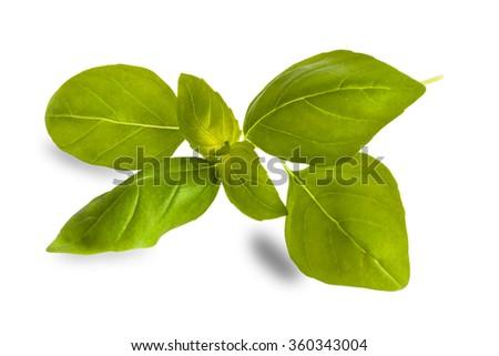 basil leaves on white - stock photo