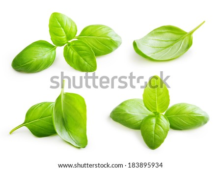 Basil leaves spice closeup isolated on white background. - stock photo