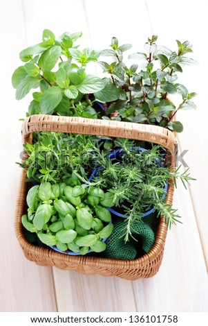 basket full of fresh herbs - herbs and spices - stock photo