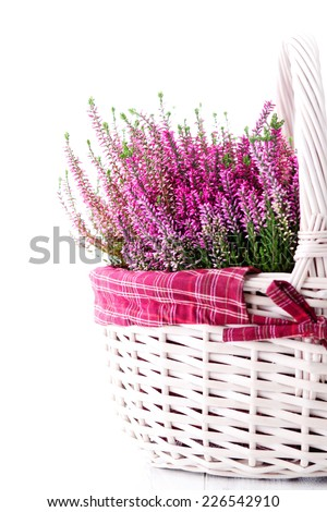 basket full of heather - flowers and plants - stock photo