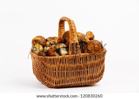 Basket full of mushrooms on a white background - stock photo