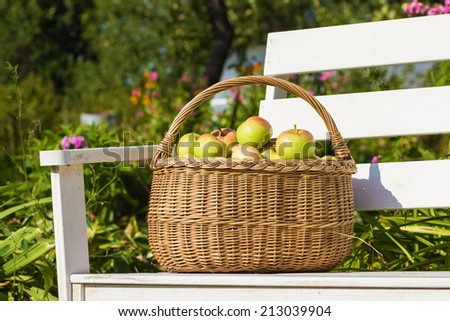 Basket full of ripe apples on a white wooden bench - stock photo