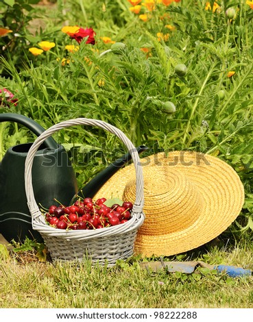 basket of cherries and straw hat in a flower garden