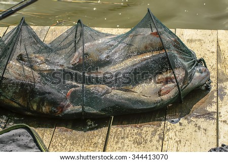Basket of fish just caught in the river - stock photo