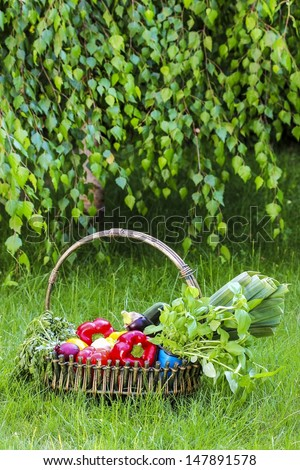 Basket of fresh vegetables in the garden. Birch branches in the background. - stock photo