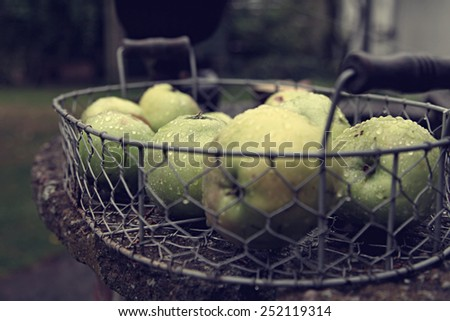 Basket of green apples outdoors in water drops - stock photo