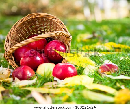 Basket of juicy apples scattered in a grass. Autumn harvest concept - stock photo