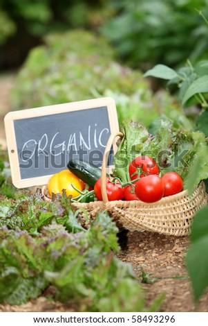 Basket of organic vegetables - stock photo