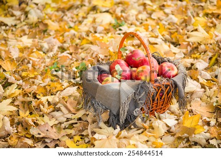 basket with apples on autumn leaves in the forest - stock photo