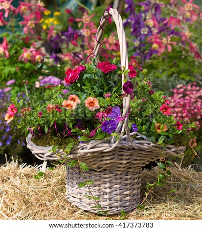 Basket with beautiful early flowering plants like petunia and dianthus on hey, with a colorful background.