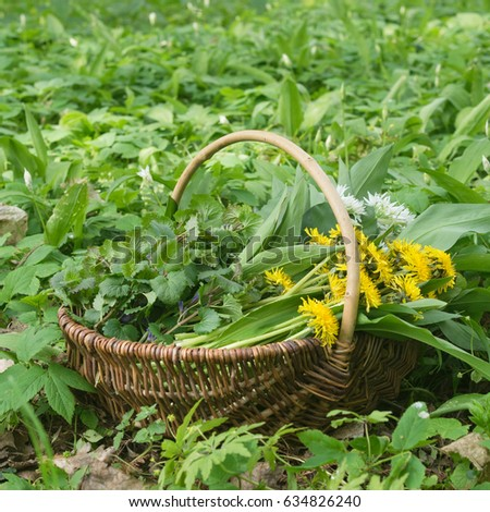 Basket with collected wild herbs in the forest / wild herbs / nature