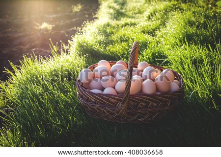 Basket With Eggs Background