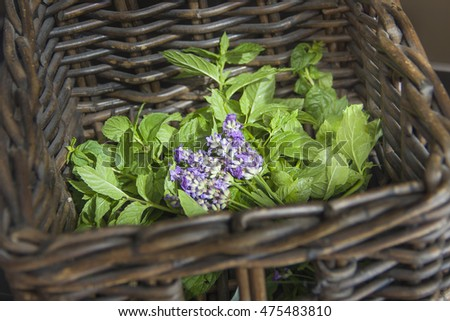 Basket with fresh herbs - mint and lavender