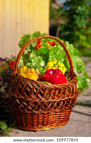 basket with fresh vegetables on a path