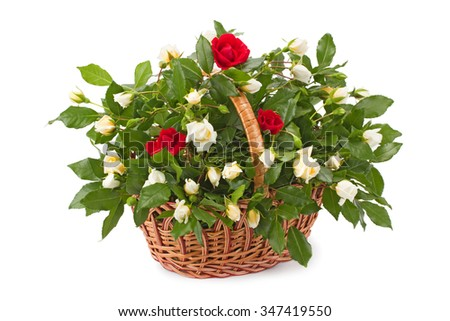 basket with fresh white and red roses isolated on white background
