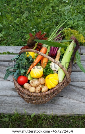 Basket with harvest. Young carrots, beets, onions, colorful courgettes, cucumbers, tomatoes and other vegetables and herbs. Vegan concept. Summer season - stock photo