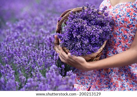 https://thumb1.shutterstock.com/display_pic_with_logo/743137/200213129/stock-photo-basket-with-lavender-flowers-in-woman-hands-200213129.jpg