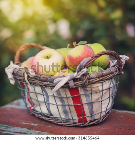 Basket with organic apples, harvest apples   - stock photo