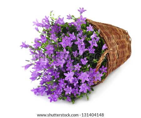 Basket with purple flowers, isolated on white - stock photo