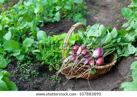 basket with radishes and other vegetables - stock photo