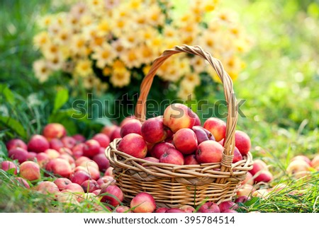 Basket with red apples on the grass against flowers