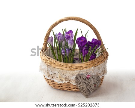 Basket with striped and purple crocuses and wicker heart on a white background with shadow
