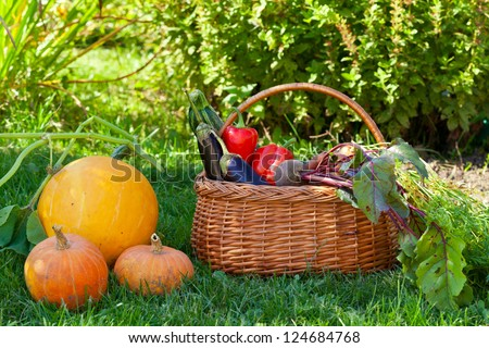 Basket with vegetables and ripe pumpkins on a grass