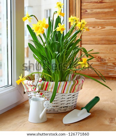 Basket with yellow daffodils and shovel and watering can on the window - stock photo