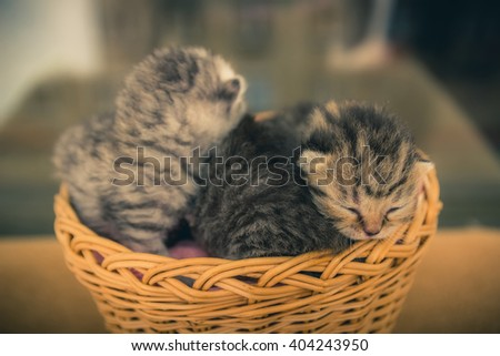 Basket with young kittens. Beauty and tenderness. Very small - stock photo