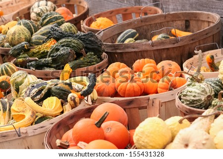 Baskets filled with a variety of gourds. - stock photo
