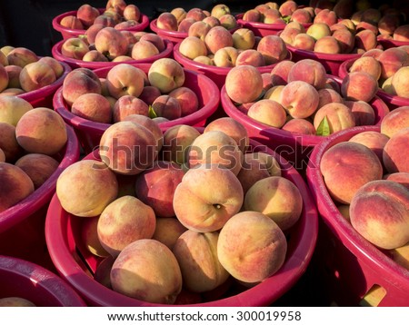 Baskets of just harvested peaches in red baskets at local farm market. - stock photo
