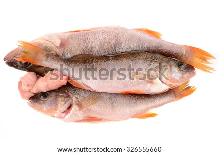 bass fish on white background - stock photo